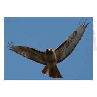 Red Tailed Hawk Card