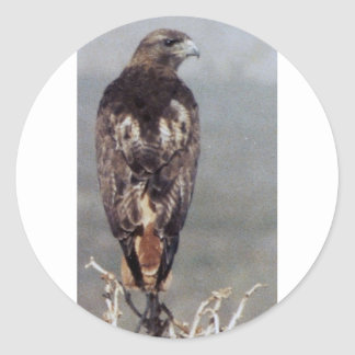 RED TAILED HAWK CLASSIC ROUND STICKER