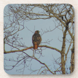 Red Tailed Hawk Coaster