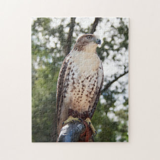 Red-Tailed Hawk Jigsaw Puzzle