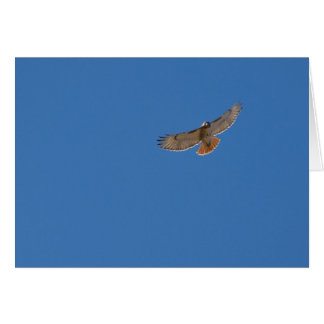 Red-tailed hawk looks at you card