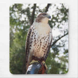 Red-Tailed Hawk Mouse Pad