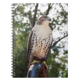 Red-Tailed Hawk Notebook