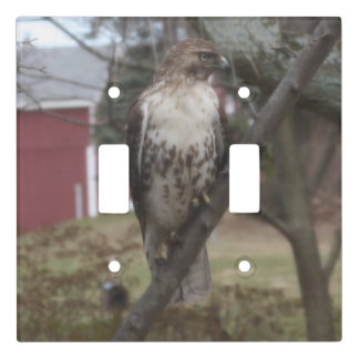 Red Tailed Hawk Perched in Tree Light Switch Cover