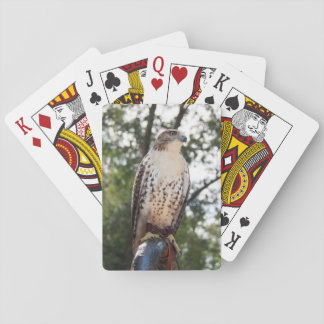 Red-Tailed Hawk Poker Deck