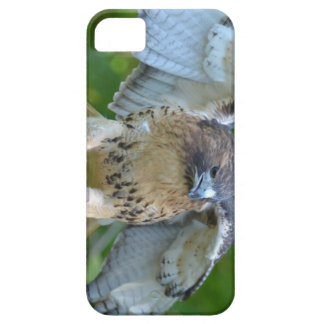 Red-tailed Hawk Spread Wings iPhone 5 Cases