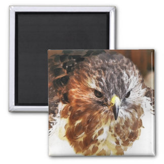 RED TAILED HAWK SQUARE MAGNET