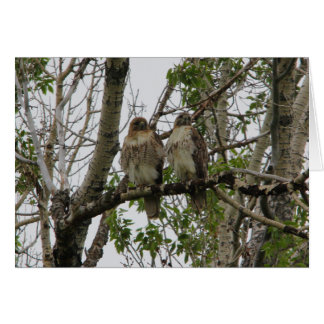 Red-Tailed Hawks Card