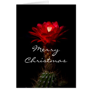 Red torch cactus flower,   Merry Christmas Card