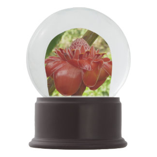 Red Torch Ginger Tropical Flower Photography Snow Globe