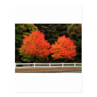 Red Trees Postcard
