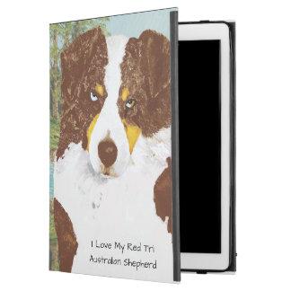 Red Tri Australian Shepherd Dog