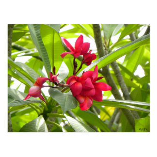 Red Tropical Flowers Postcard