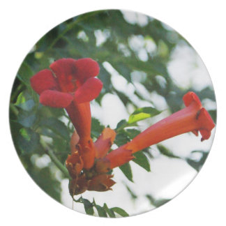 Red Trumpet flower plate