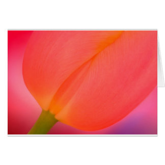 Red Tulip Close-up Card