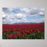 Red Tulip Field Print
