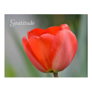 Red Tulip Floral Gratitude Postcard