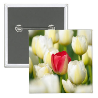 Red tulip in a field of white tulips 2 inch square button