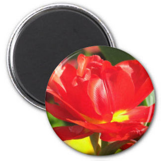 Red Tulip Photographs Magnet
