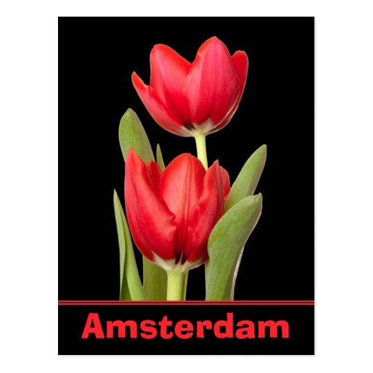 Red Tulips Amsterdam Postcard