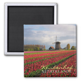 Red tulips and a windmill magnet