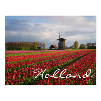 Red tulips and a windmill postcard