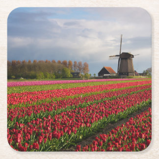 Red tulips and a windmill square paper coaster
