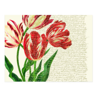 Red Tulips Calligraphy Postcard