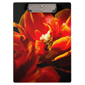 Red tulips dark background clipboards