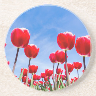 Red tulips field from below with blue sky beverage coaster