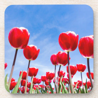 Red tulips field from below with blue sky drink coaster