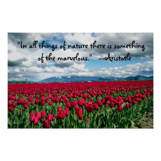 Red Tulips Field Poster