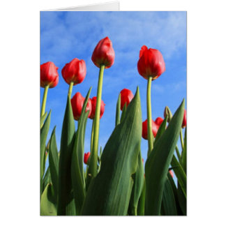 Red Tulips In The Sky Card