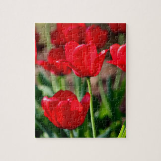 Red Tulips Jigsaw Puzzle