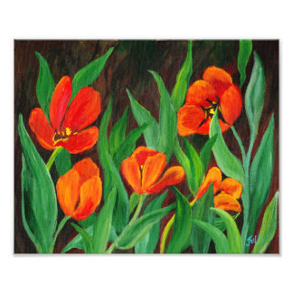 Red Tulips Photo Print