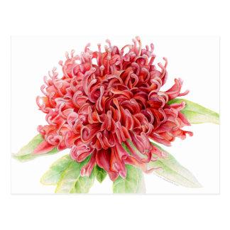 Red waratah botanical watercolor art postcard