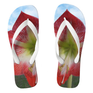 Red & white Amaryllis flower against sky Flip Flops