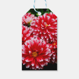 Red & White Dahlias Gift Tags
