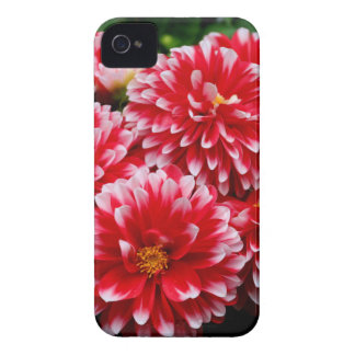 Red & White Dahlias iPhone 4 Case