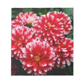 Red & White Dahlias Notepad
