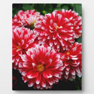 Red & White Dahlias Plaque