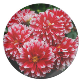 Red & White Dahlias Plate
