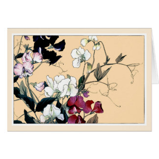 Red & White Sweetpeas, Botanical Art Card