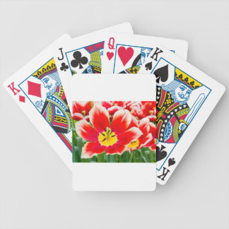 Red white tulip in field of tulips poker deck