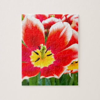 Red white tulip in field of tulips puzzle