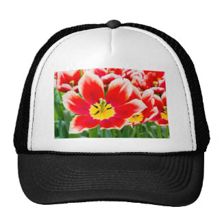 Red white tulip in field of tulips trucker hat