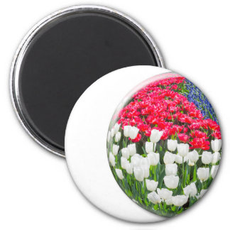Red white tulips and blue grape hyacinths 2 inch round magnet