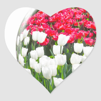 Red white tulips and blue grape hyacinths heart sticker