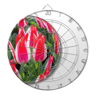 Red white tulips in glass sphere on white dartboards