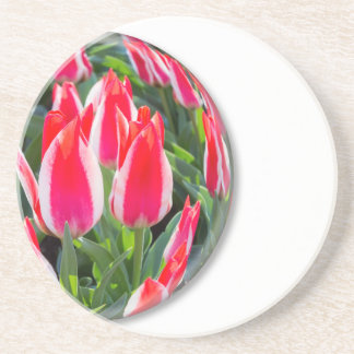 Red white tulips in glass sphere on white drink coasters